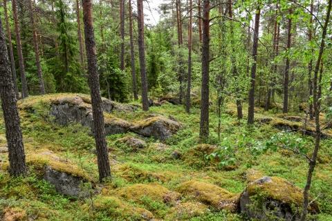 Maaston parhaat osat mahdollistavat kovan vauhdinpidon.